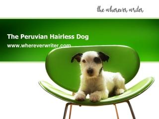 The Peruvian Hairless Dog-www.whereverwriter.com