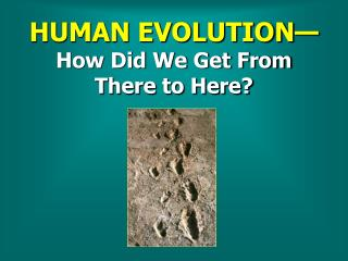 HUMAN EVOLUTION— How Did We Get From   There to Here?