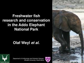 Freshwater fish research and conservation in the Addo Elephant National Park   Olaf Weyl et al.