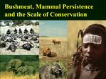 Bushmeat, Mammal Persistence and the Scale of Conservation