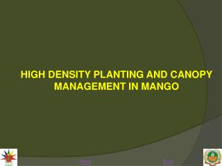 HIGH DENSITY PLANTING AND CANOPY MANAGEMENT IN MANGO