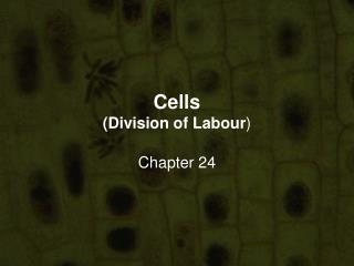 Cells (Division of Labour )