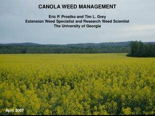 CANOLA WEED MANAGEMENT Eric P. Prostko and Tim L. Grey Extension Weed Specialist and Research Weed Scientist The Univers