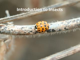Introduction to Insects