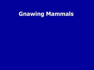 Gnawing Mammals