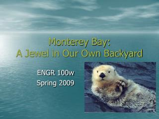 Monterey Bay:  A Jewel in Our Own Backyard
