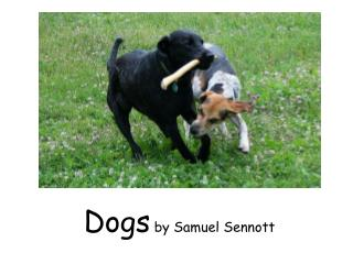 Dogs  by Samuel Sennott