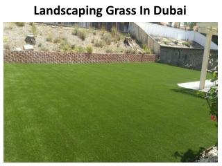 Landscaping Grass Dubai