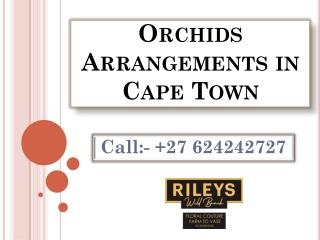Orchids Arrangements in Cape Town