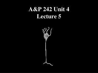 A&P 242 Unit 4 Lecture 5