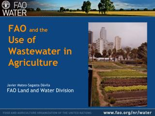 FAO and the Use of Wastewater in Agriculture