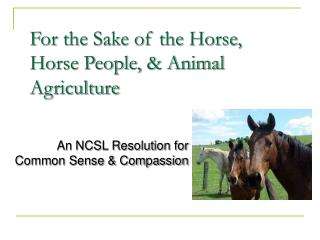 For the Sake of the Horse, Horse People,  Animal Agriculture