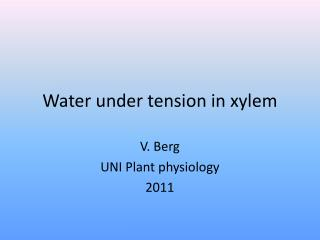 Water under tension in xylem