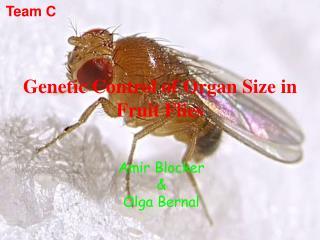 Genetic Control of Organ Size in Fruit Flies