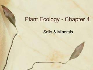Plant Ecology - Chapter 4
