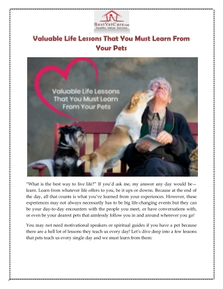 Valuable Life Lessons That You Must Learn From Your Pets