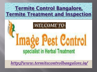 Termite Control Bangalore, Termite Treatment and Inspection - Imagepestcontrol