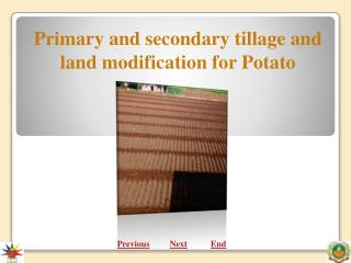 Primary and secondary tillage and land modification for Potato