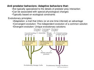 Anti predator behaviors: Adaptive behaviors that: Are typically specialized to the details of predator prey interaction