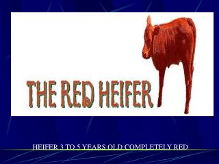 HEIFER 3 TO 5 YEARS OLD COMPLETELY RED