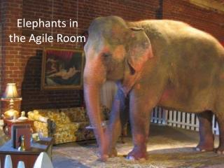 Elephants in the Agile Room