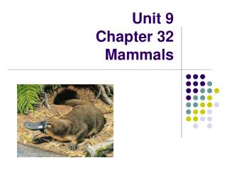 Unit 9 Chapter 32 Mammals