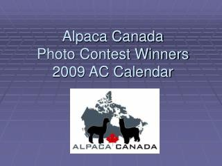 Alpaca Canada Photo Contest Winners  2009 AC Calendar
