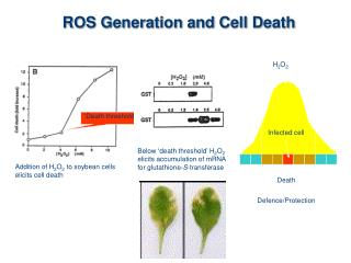 ROS Generation and Cell Death