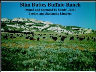 Slim Buttes Buffalo Ranch       Owned and operated by Sandy