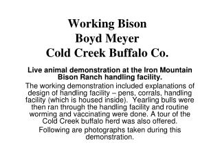 Working Bison Boyd Meyer Cold Creek Buffalo Co.