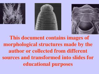 This document contains images of morphological structures made by the author or collected from different sources and tra