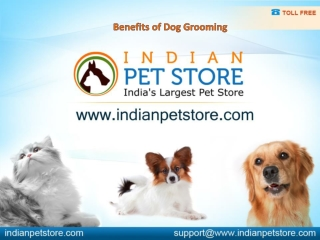 Benefits of Dog Grooming