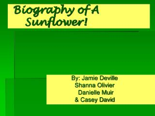 Biography of A                      	Sunflower!