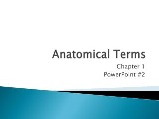 Anatomical Terms