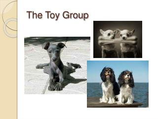 The Toy Group