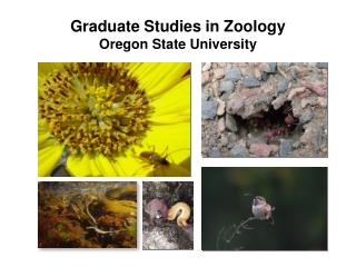 Graduate Studies in Zoology  Oregon State University