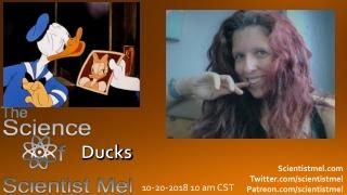 The Mallard Duck  By: Sarah