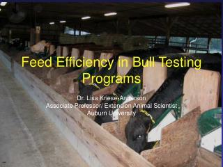 Feed Efficiency in Bull Testing Programs