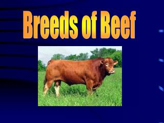 Breeds of Beef