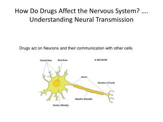 How Do Drugs Affect the Nervous System  . Understanding Neural Transmission