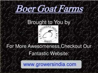 Boer Goat Farms