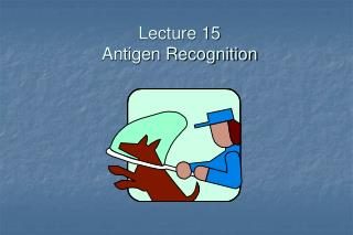Lecture 15 Antigen Recognition