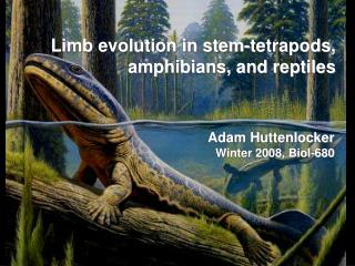 Limb evolution in stem-tetrapods, amphibians, and reptiles