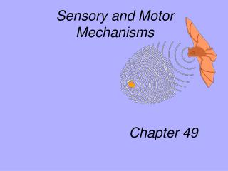 Sensory and Motor Mechanisms                          Chapter 49
