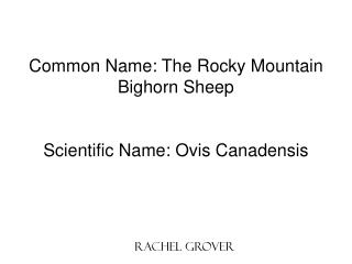 Common Name: The Rocky Mountain Bighorn Sheep Scientific Name: Ovis Canadensis