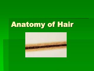 Anatomy of Hair