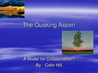 The Quaking Aspen