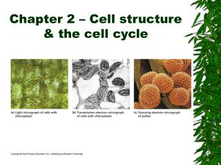 Chapter 2 – Cell structure & the cell cycle