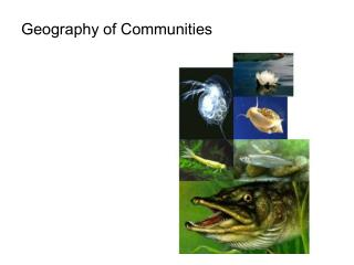 Geography of Communities