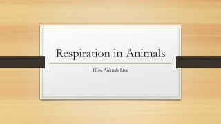 THE RESPIRATORY STRUCTURE  BREATHING MECHANISM IN HUMAN AND ANIMALS